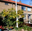 Woonforte renoveert 51 woningen in Zwammerdam