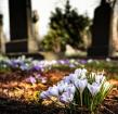 Alphense begraafplaatsen worden optimaal ingericht