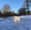 IJsbeer gespot op het ijs in Alphen